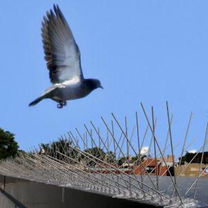 Bird-X Inc Bird Spikes
